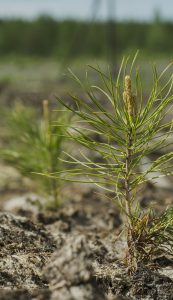 Close-up photo of a small tree recently planted